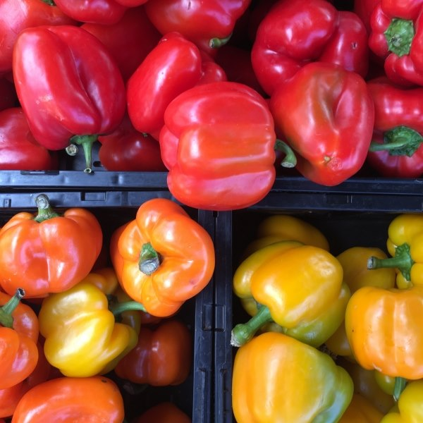 Colorful bell peppers at Community Food Bank of San Benito County