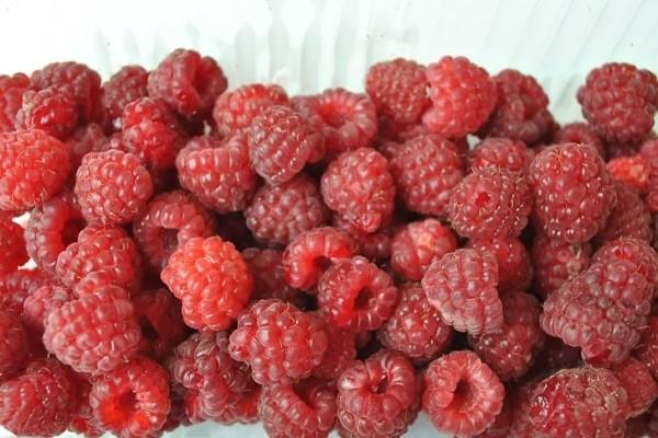 Ripe raspberries at food bank of San Benito County